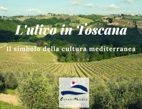 L'ulivo in Toscana: il simbolo della cultura mediterranea